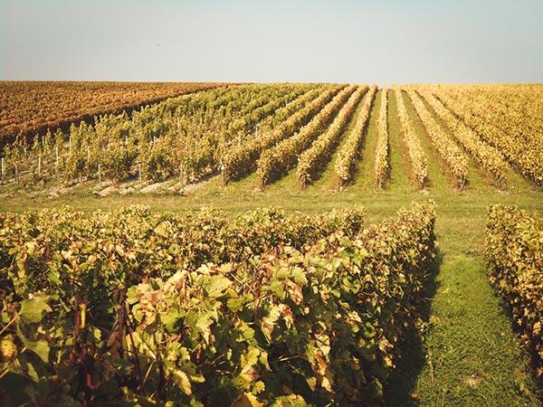 Vignoble Domaine-Sauvète