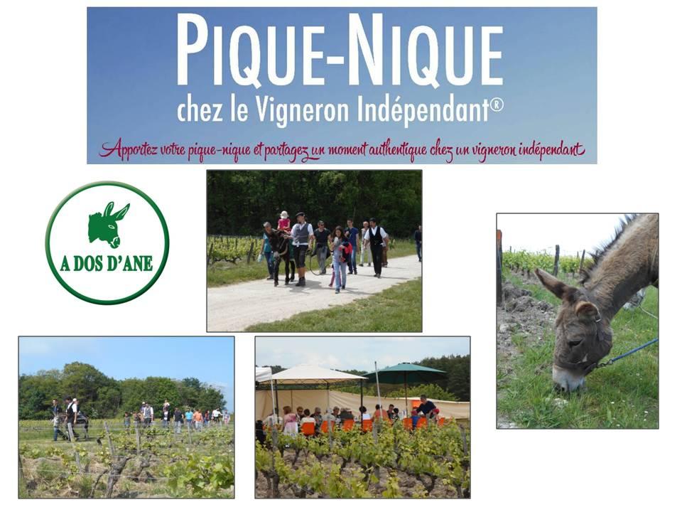 Photos Pique-Nique VIF 2015 (2)